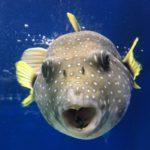 最新!魚群探知機内蔵 水中ドローンの国内価格は17万円代!