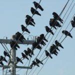 「ドローンによる鳥獣害対策」実証実験
